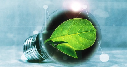 Photo of lightbulb with green leaf